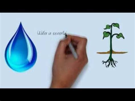 Water Conservation - WriteWork